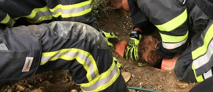 Hund aus Rohr gerettet